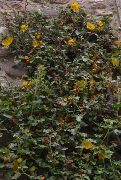 THall-planter-84