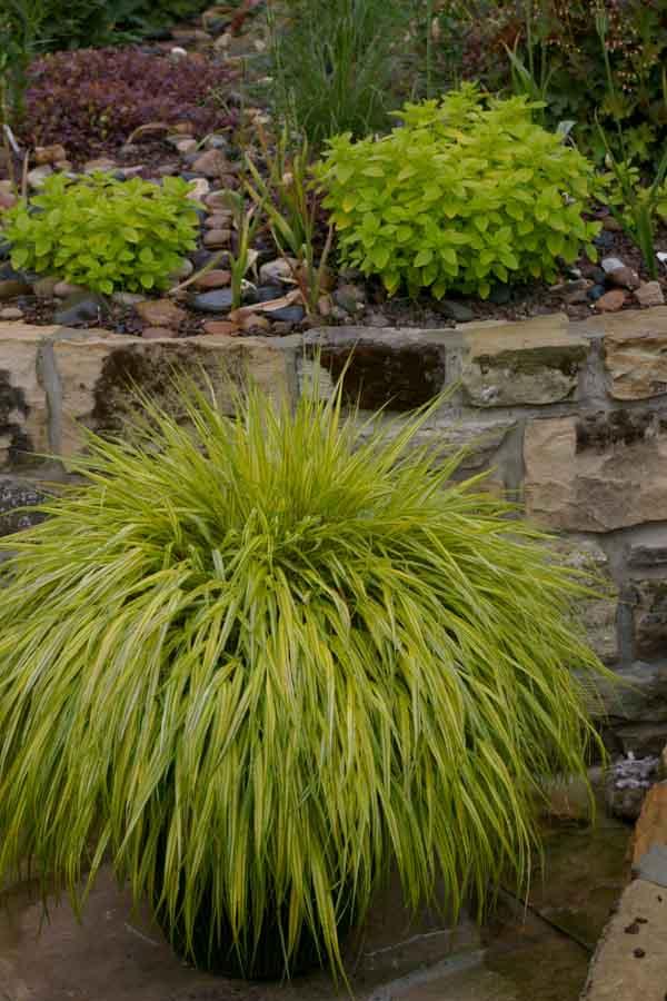 Vintergrønne planter i potter