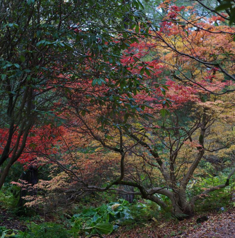 Autumnalis2b